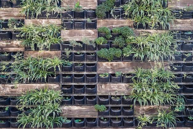 Pflanzenfassadenwand. lebende pflanzen in töpfen an der wand. design und blumendekoration von städtischen straßenobjekten. foto in hoher qualität