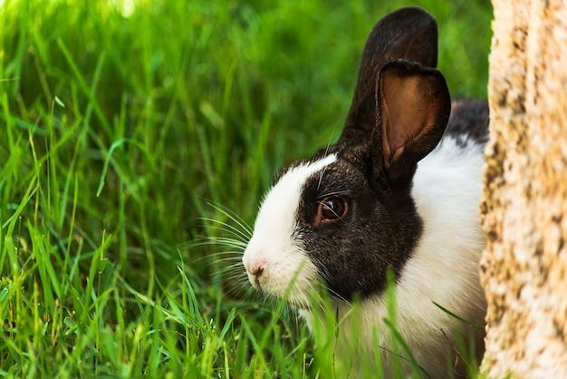 Pflanzenfresser tiere kaninchen eichhörnchen pferde antilopen