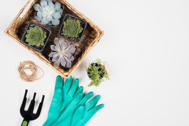Pflanzenkorb und blaue handschuhe