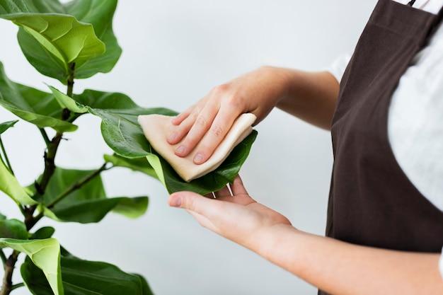 Pflanzenladenbesitzer, der das blatt einer topfpflanze reinigt