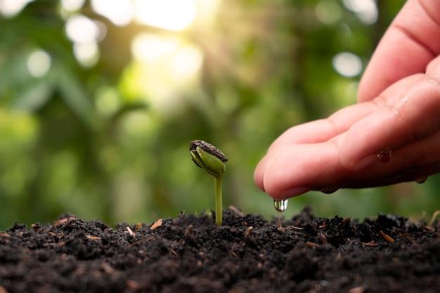 Pflanzenpflege und bewässerung von setzlingen auf fruchtbarem boden, pflanzideen für den umweltschutz