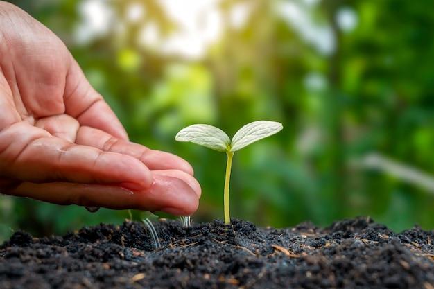 Pflanzenpflege und bewässerung von setzlingen, die auf fruchtbarem boden wachsen, landwirtschaftliche ideen und bewässerung von pflanzen.