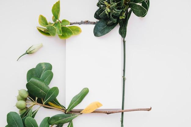 Pflanzenrahmen um papierblatt