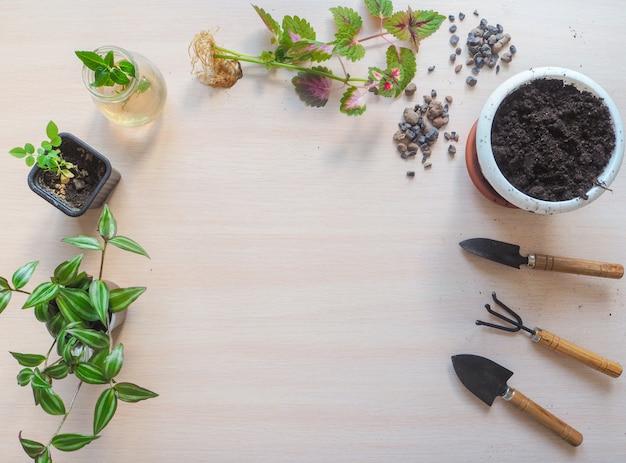 Pflanzensämling bereit zum pflanzen.