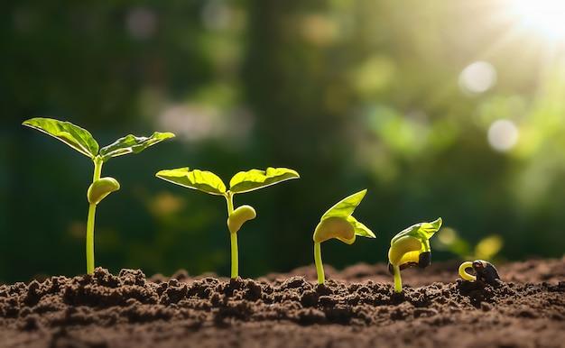 Pflanzensamenwachstumsschrittkonzept im garten und im sonnenlicht.