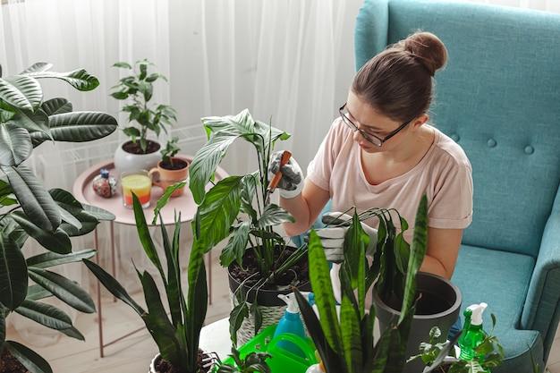 Pflanzentransplantation, zimmerpflege für frauen und transplantationspflanze