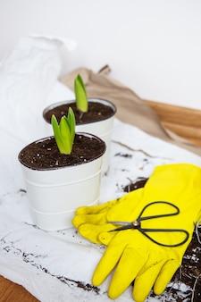 Pflanzentransplantationskonzept
