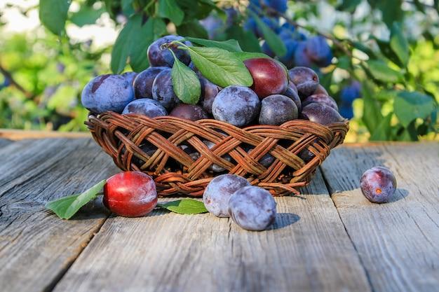 Pflaumen in einer vase auf einem holztisch im sommergarten. saisonale früchte.