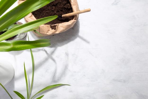 Pflege der heimischen pflanzen auf weißem hintergrund.