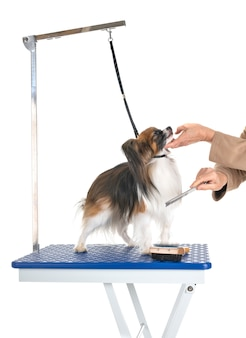 Pflegetisch und kleiner hund