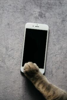 Pfote der katze mit smartphone