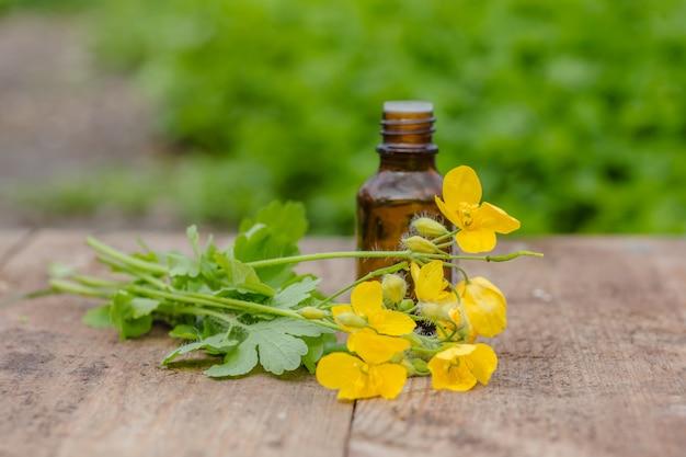 Pharmazeutische flasche mit gelben blüten von chelidonium majus
