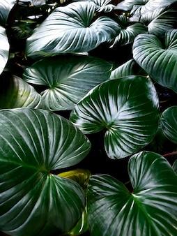 Philodendron-garten