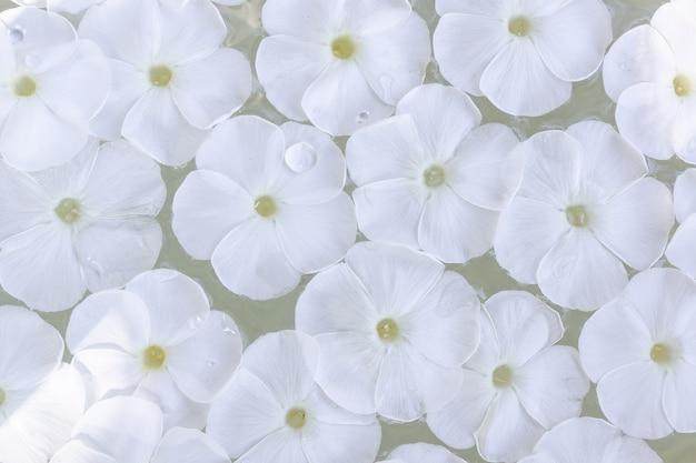 Phlox paniculata auf wasser, textur und hintergrund von phlox paniculata blumen