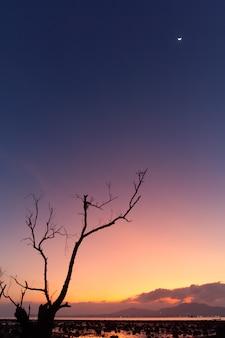 Phuket strandlandschaft am abend vor sonnenuntergang ist trockener baum am strand herausragendes merkmal das licht des himmels rosa blau der halbmond am himmel und die berge gegenüberliegende seite