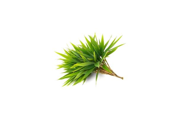 Phyllostachys aurea bambusblätter isoliert auf weißem hintergrund