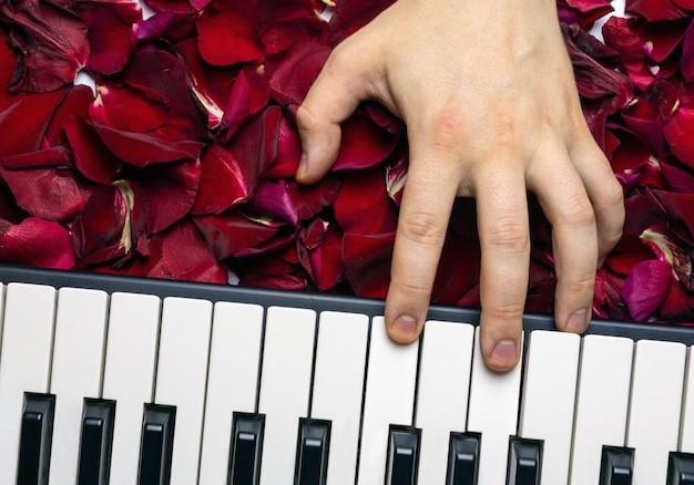 Pianisthand auf roten rosenblumenblättern, die romantisches serenade spielen