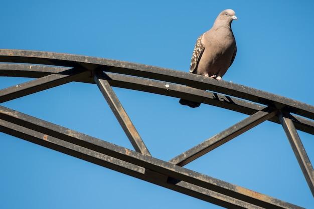 Pidgeon über einer metallstruktur