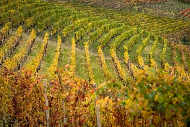 Piemont landschaft im herbst