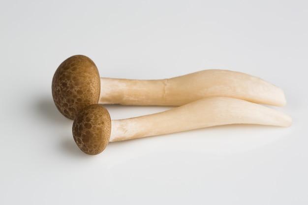 Pilz auf einem weißen teller, abschluss oben
