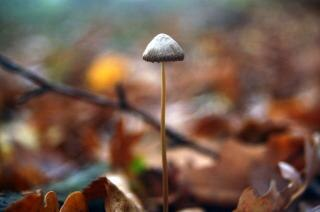 Pilz, einzelne