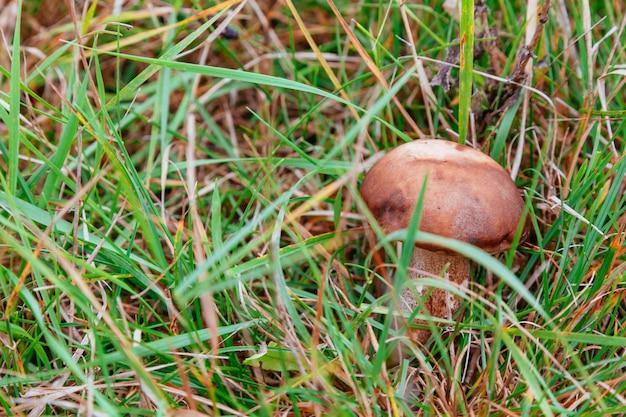 Pilz im waldmakro, wald, nahaufnahme