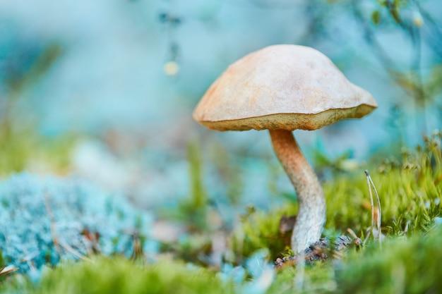 Pilz wächst im herbstwald