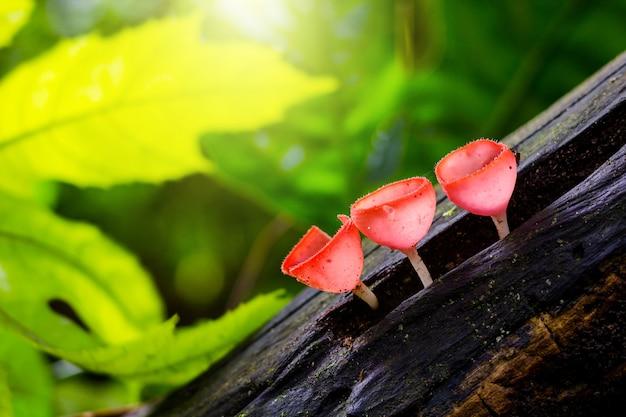 Pilzchampagner im wald mit grünem hintergrund