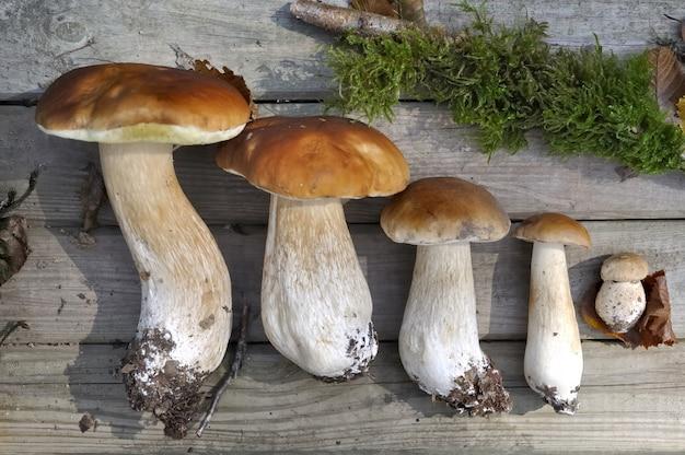 Pilze angeordnet auf holzbrett vom kleinsten in das größte