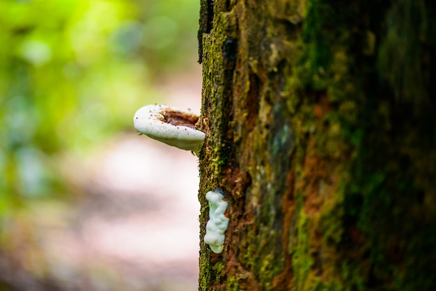 Pilze auf einem bauholz in der natur