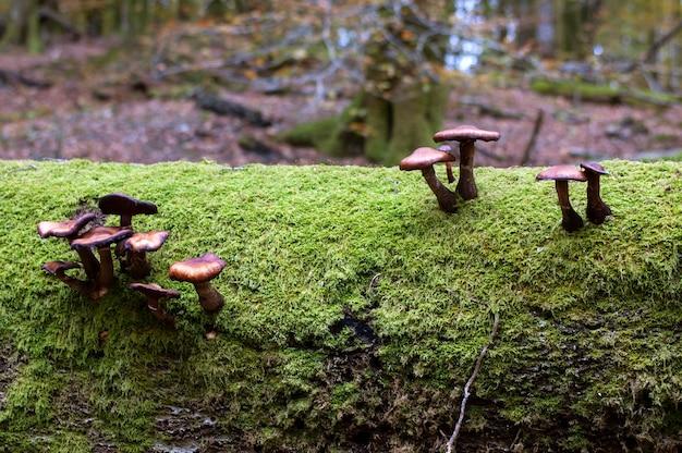 Pilze auf stamm voller moos