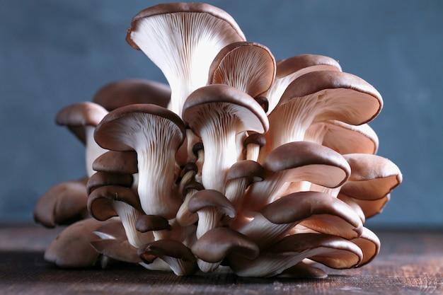 Pilze pleurotus auf dem tisch