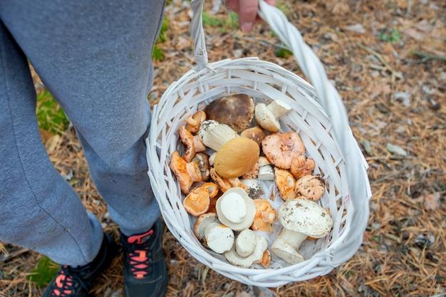 Pilzsammler sammelten einen korb voller pilze