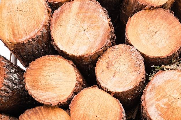 Pine protokolle