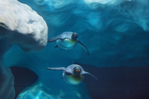 Pinguine, die unter wasser schwimmen