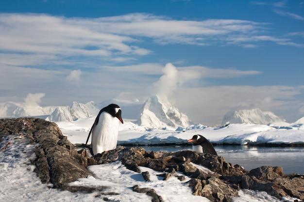 Pinguine in einer verschneiten landschaft