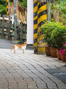 Pingxi, taiwan - 20. september 2021: alte straßenfassade von pingxi am 20. september 2021 in pingxi, new taipei city, taiwan.