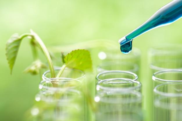 Pipettieren sie das fallenlassen der blauen beispielchemikalie über der jungen beispielanlage, die im reagenzglas, biotechnologieforschungskonzept wächst