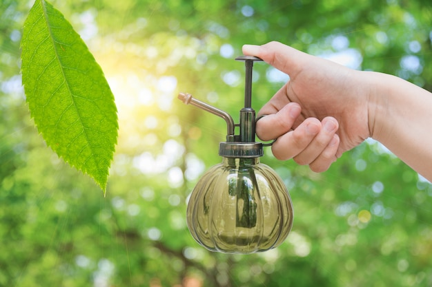 Plantagenhand, die frischen grünpflanzebaum für natürliche eco erdpflege wässert