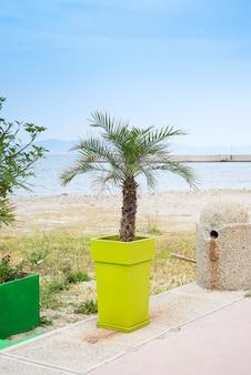 Plastiktopf mit kleiner palme auf zementboden und sonnenlicht am abend