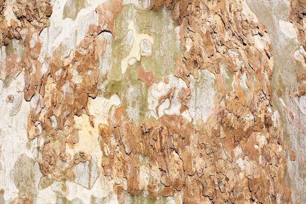 Platanus occidentalis baumrinde textur nahaufnahme. ein baum, der rinde abwirft. das muster ähnelt einem militärischen tarnmuster.