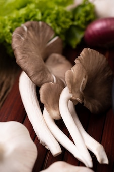 Pleurotus pulmonarius oder weißer feenpilz auf ein stück holz gelegt