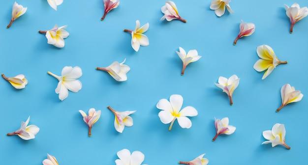Plumeria oder frangipani-blume auf blau
