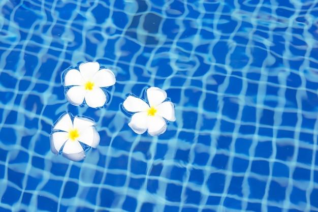 Plumeria oder frangipani blumen im schwimmbad. draufsicht