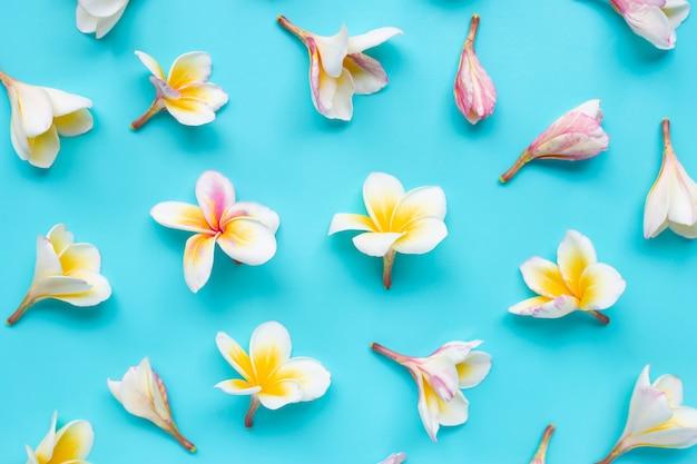 Plumeria- oder frangipaniblume auf blau
