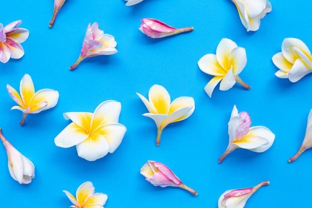 Plumeria- oder frangipaniblume auf blauem hintergrund.