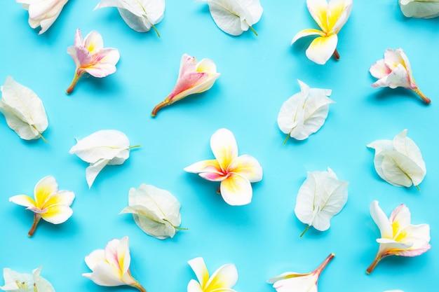 Plumeria- oder frangipaniblume mit weißer bouganvillablume auf blauem hintergrund.