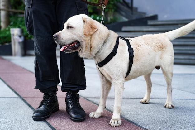 Polizeihund im dienst, der die bombe im ereignis findet.