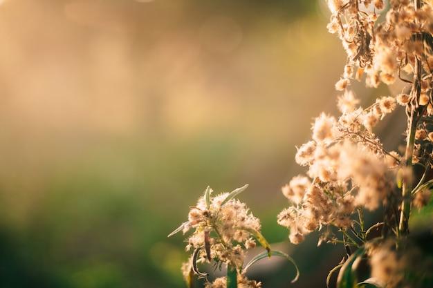 Pollen von gras