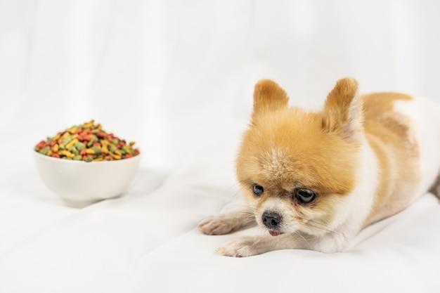 Pomeranian-hund, der auf dem tisch mit lebensmittel am morgentag einsam liegt.
